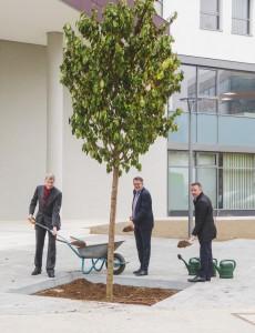 Start für eine gute Partnerschaft: Vorstandsvorsitzender Andreas Arndt (li., pbb) und Vorstandsmitglied Andreas Schenk (pbb) pflanzten mit Geschäftsführer Michael Blaschek (re., Business Campus) vor dem Haupteingang der Deutsche Pfandbriefbank AG einen Kirschbaum.